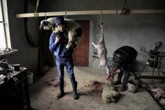 Lamb-slaughter