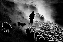 Shepherd-life